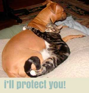 i'll protect you!