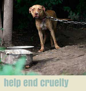 help end cruelty