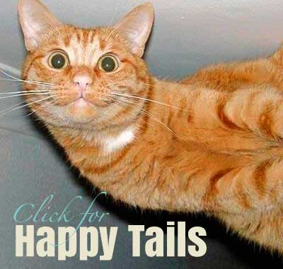 Click for Happy Tails