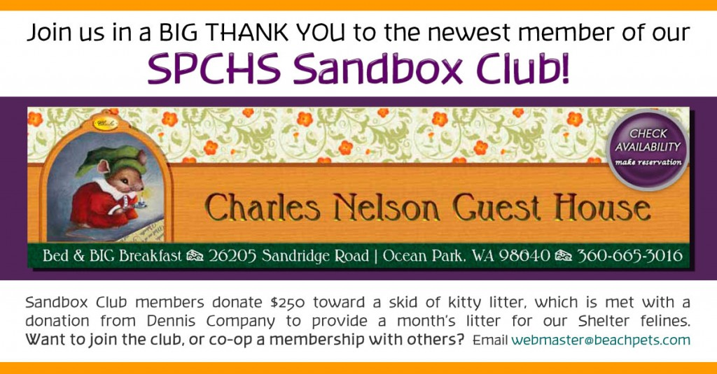 Sandbox-Club--CNBNB