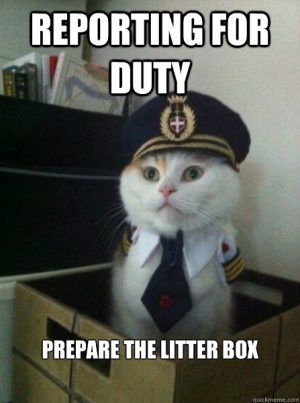 Captain of the Litter Box