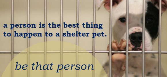 Sometimes a person is the best thing to happen to a shelter pet. Be that person.