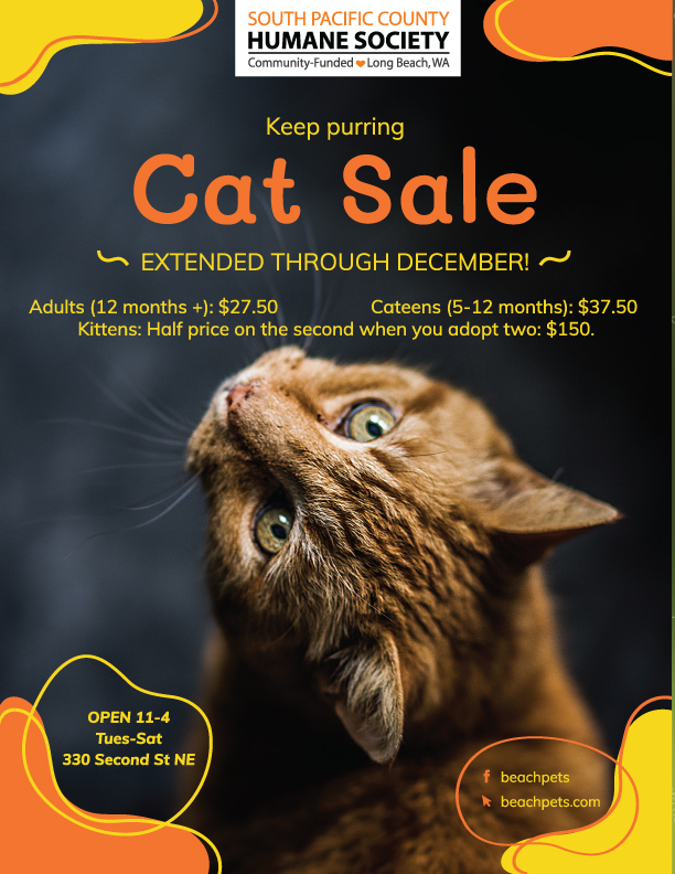 Cat Sale Extended