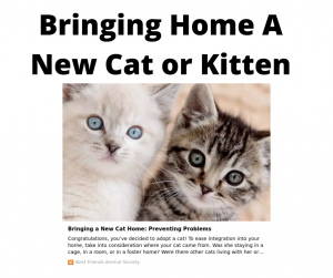 bringing home a new cat or kitten