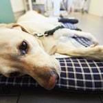 Dog sick due to parvovirus