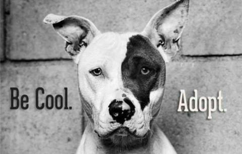 pets adoption organization