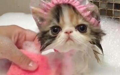 Mar: Online Kitten Shower
