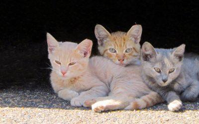 Community Cats and TNR