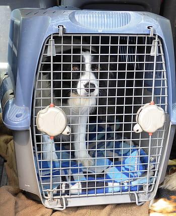 DOG IN transport
