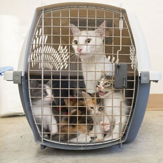 cat surrendered with kittens