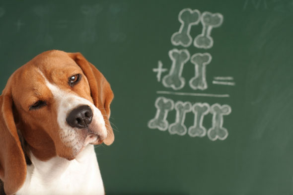 number crunching dog