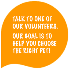Talk to one of our volunteers.  Our goal is to help you choose the right pet!