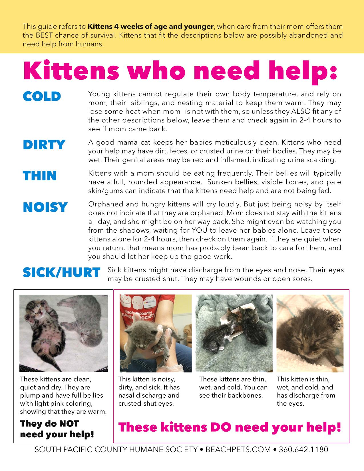 Kittens who need help