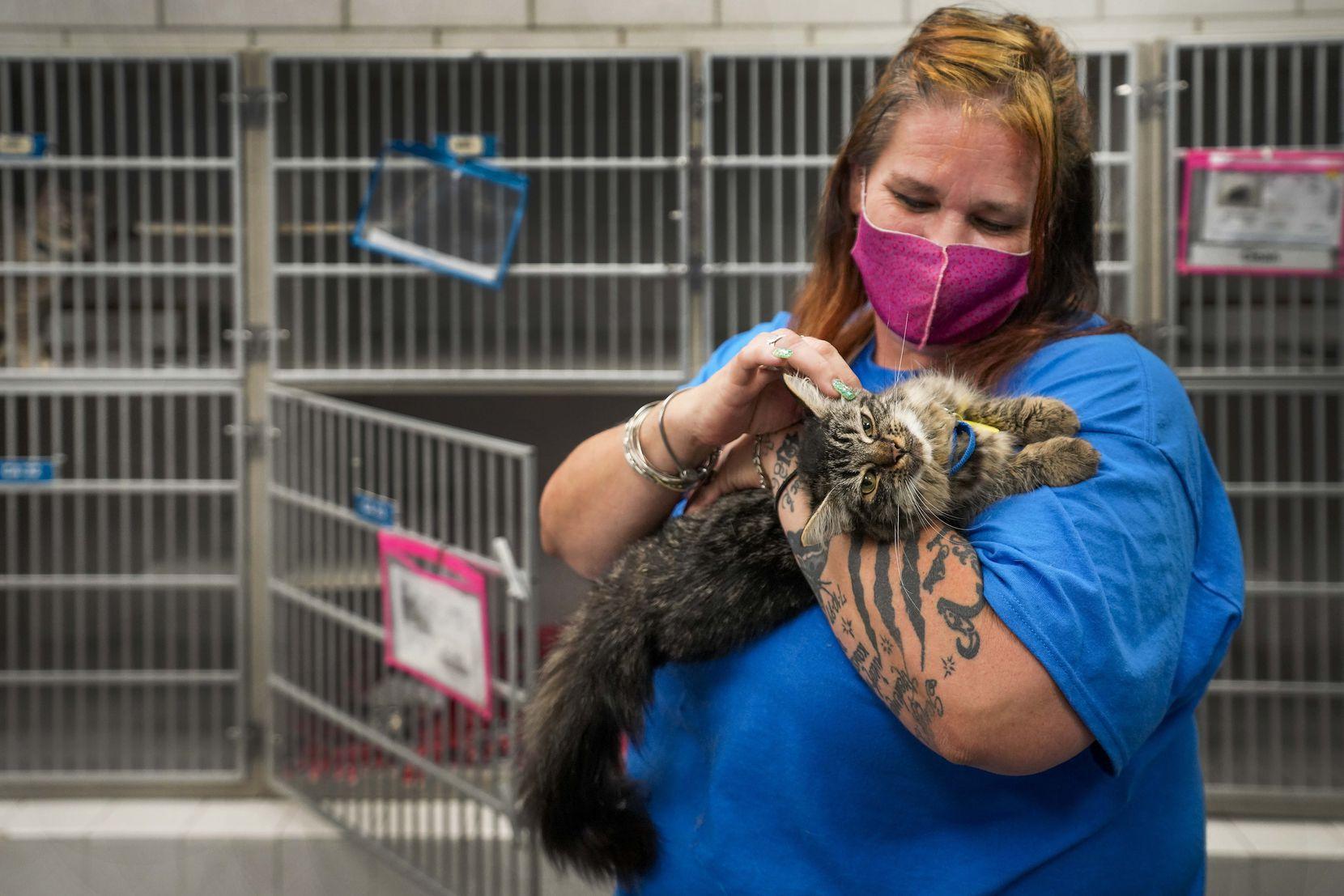 animal care technician