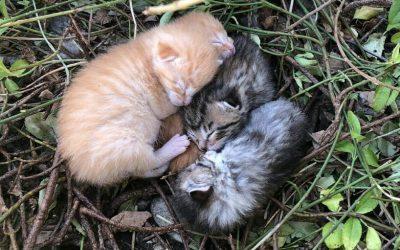 Found Kittens