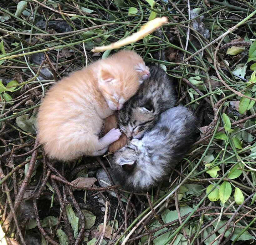 kittens born outside