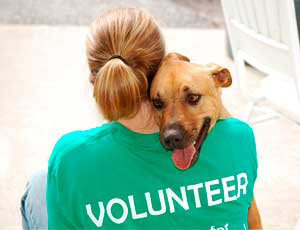 Join our Team and Volunteer